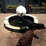 Enjoying the refreshing fountain after a walk